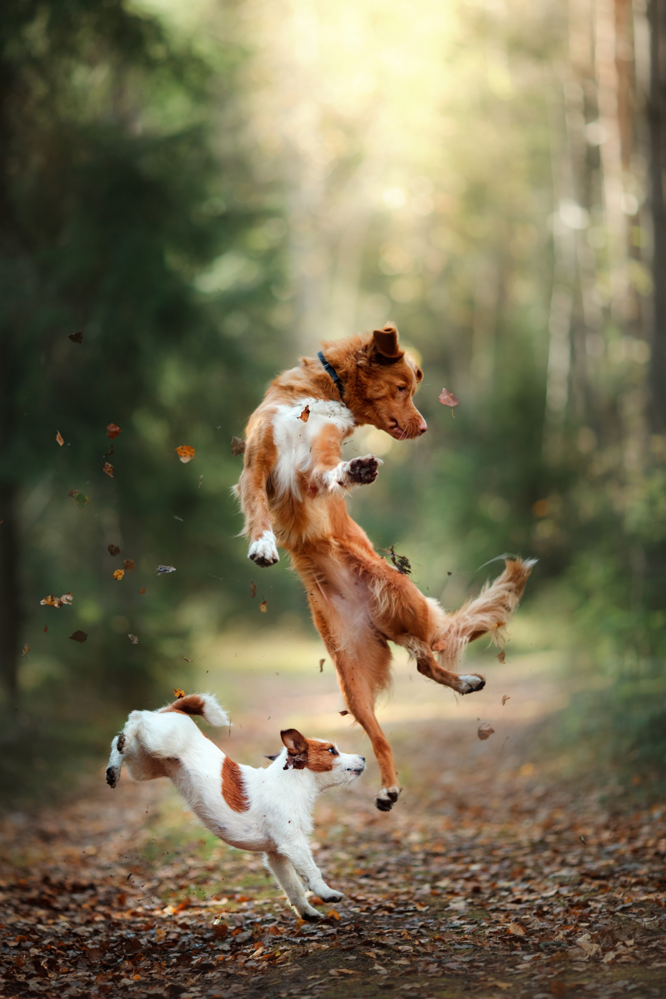 Happy dogs jumping together
